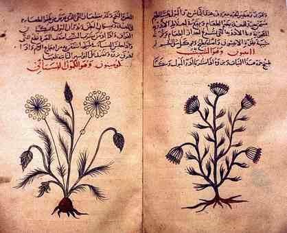 Livre arabe des remèdes simples, d'après la Materia Media de Dioscoride – Le cumin et l'aneth, 1334